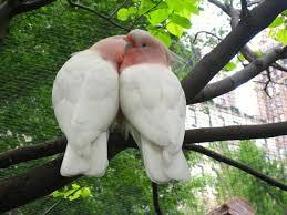 انواع الطيور في بني مالك