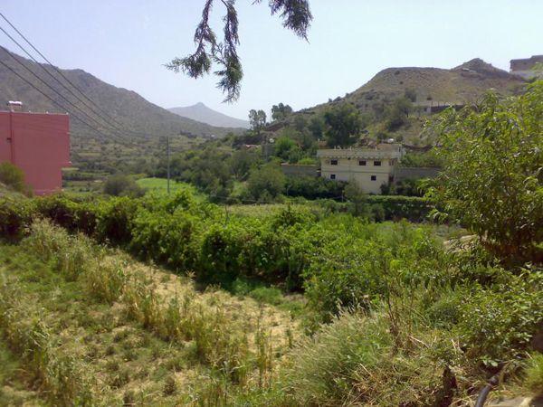 صور من بني مالك الطائف