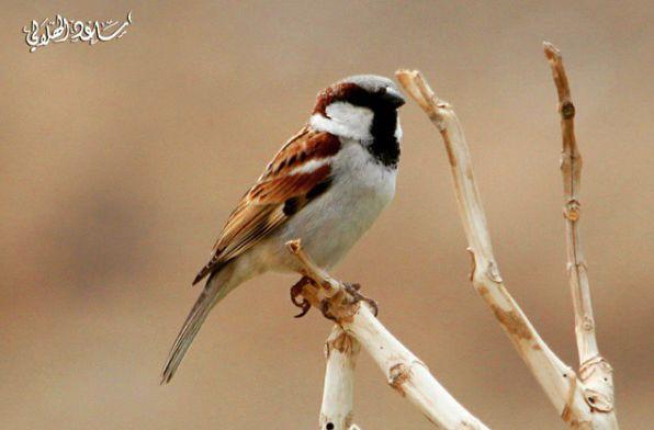 بعض الطيور التي تعيش في بني مالك الطائف