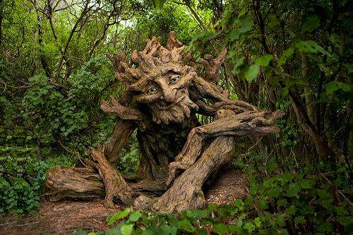 اشجار اشكالها غريبه