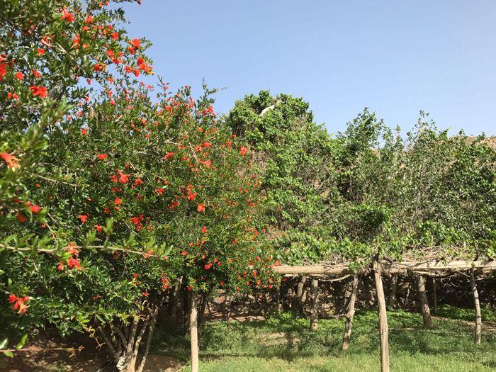 صور من قرية الحجلاء بني مالك محافظة الطائف
