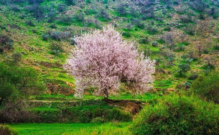 صور من بني مالك ارض الطبيعه