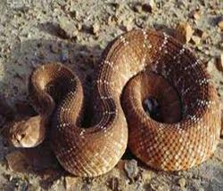 انوا ع الثعابين في بني مالك