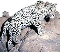 حيوانات  تعيش في مرتفعات بني مالك